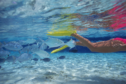 海の中にいる魚とシュノーケリングする人の足