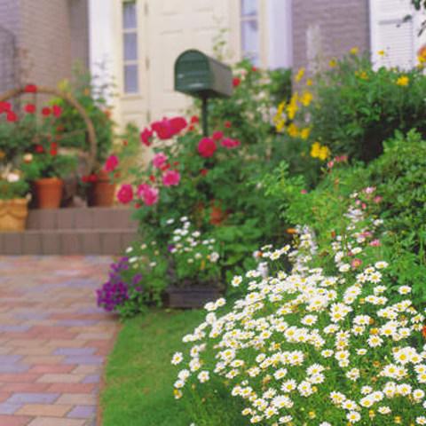 夏もガーデニングを楽しみたい!おすすめの植物6選