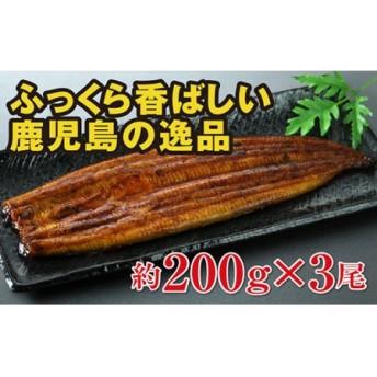 鹿児島県大隅産うなぎ 約200g×3尾