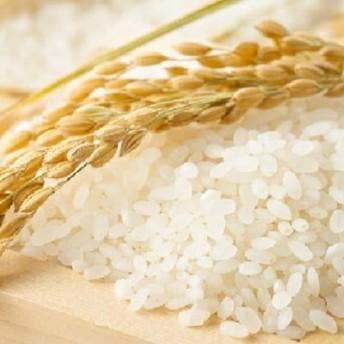 【お米の定期便】鹿児島県産ひのひかり10kg×12か月