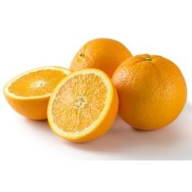 和歌山県有田産 ネーブルオレンジ 約7kg 20~30玉【エバグリーン廣甚】◆◆