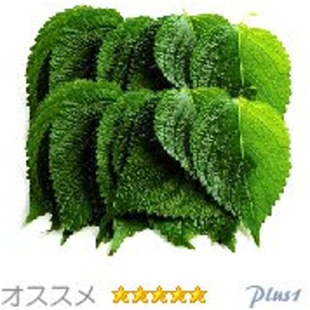 えごま の 葉