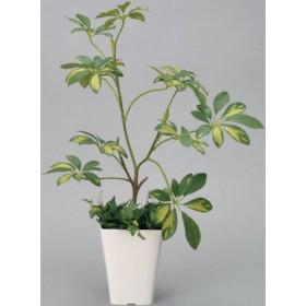 光触媒観葉植物 シェフレラ フロアタイプ ミドルサイズ 光触媒 花 スプレー インテリアグリーン 胡蝶蘭 消臭 大型