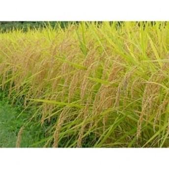 令和元年産 農薬不使用 佐渡コシヒカリ(在来種) 精米5kg