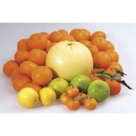 冬の味覚「柑橘類つめ合わせセット」 約10kg
