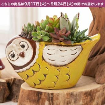 【敬老の日フラワーギフト】 寄せ植え「ほっこりフクロウ」