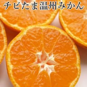 【約5kg】愛媛県産 チビたま温州みかん(ご家庭用・傷あり)