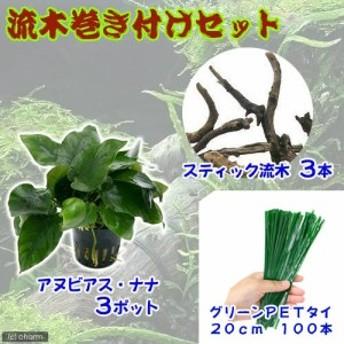 (水草)アヌビアスナナ(3ポット) +スティック流木(3本) +ビニタイ付 説明書付
