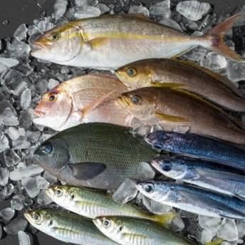 【漁港直送】朝穫れ鮮魚 詰め合わせ 4kg