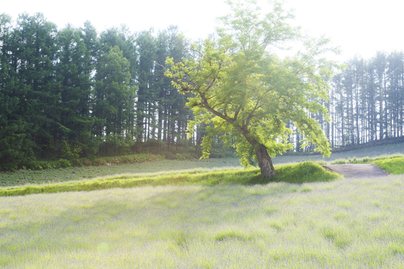 木々の風景写真