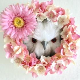 直径20cm ガーベラとピンクアジサイのホワイトオウルリース 桜ミックス フクロウさん