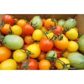 カラーミニトマト詰め合わせ 約1kg