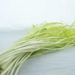 韭黃(250公克±10%)
