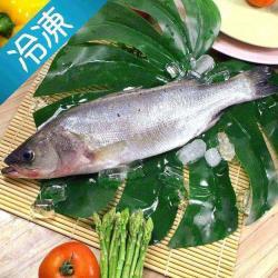 海鮮大叔-鮮凍七星鱸魚600-700g(三去)