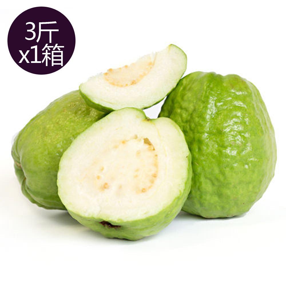 【果之家】燕巢牛奶珍珠芭樂3台斤(1箱/約3-5顆)