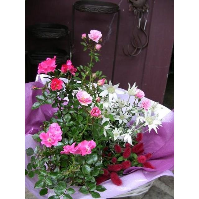 【パリスタイルの花屋】春にオススメ!春の鉢植えギフト【誕生日・結婚祝い・結婚記念日・プレゼント 各種お祝い・記念日に】