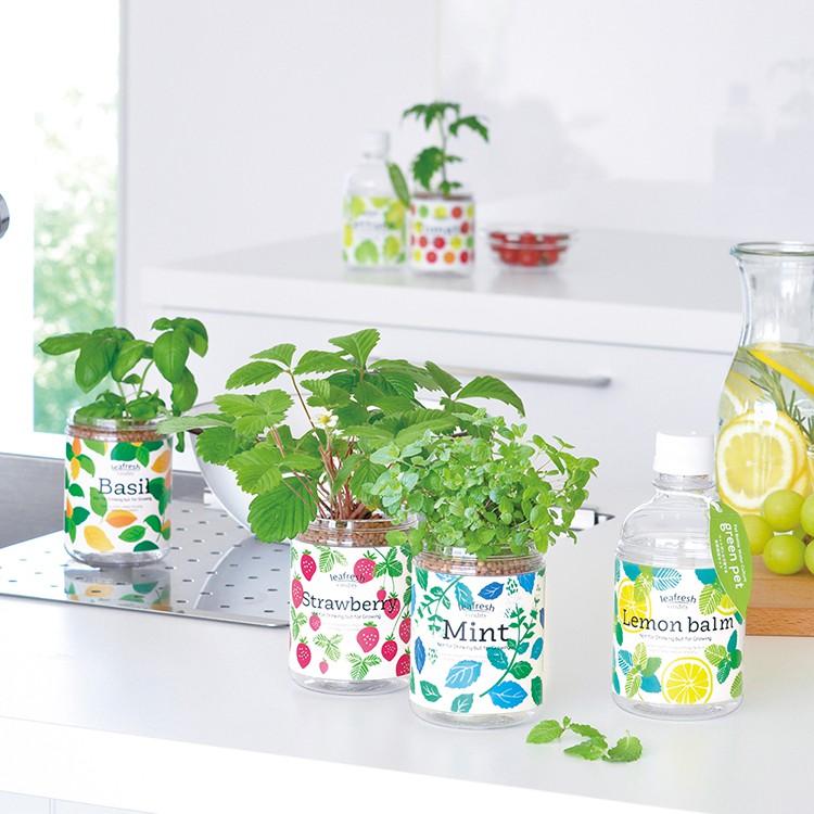 Green pet 綠色水耕植物瓶 (聖新陶芸/日本正版授權/水耕植物/薄荷/羅勒/檸檬香草/野草莓/懶人植栽/居家)