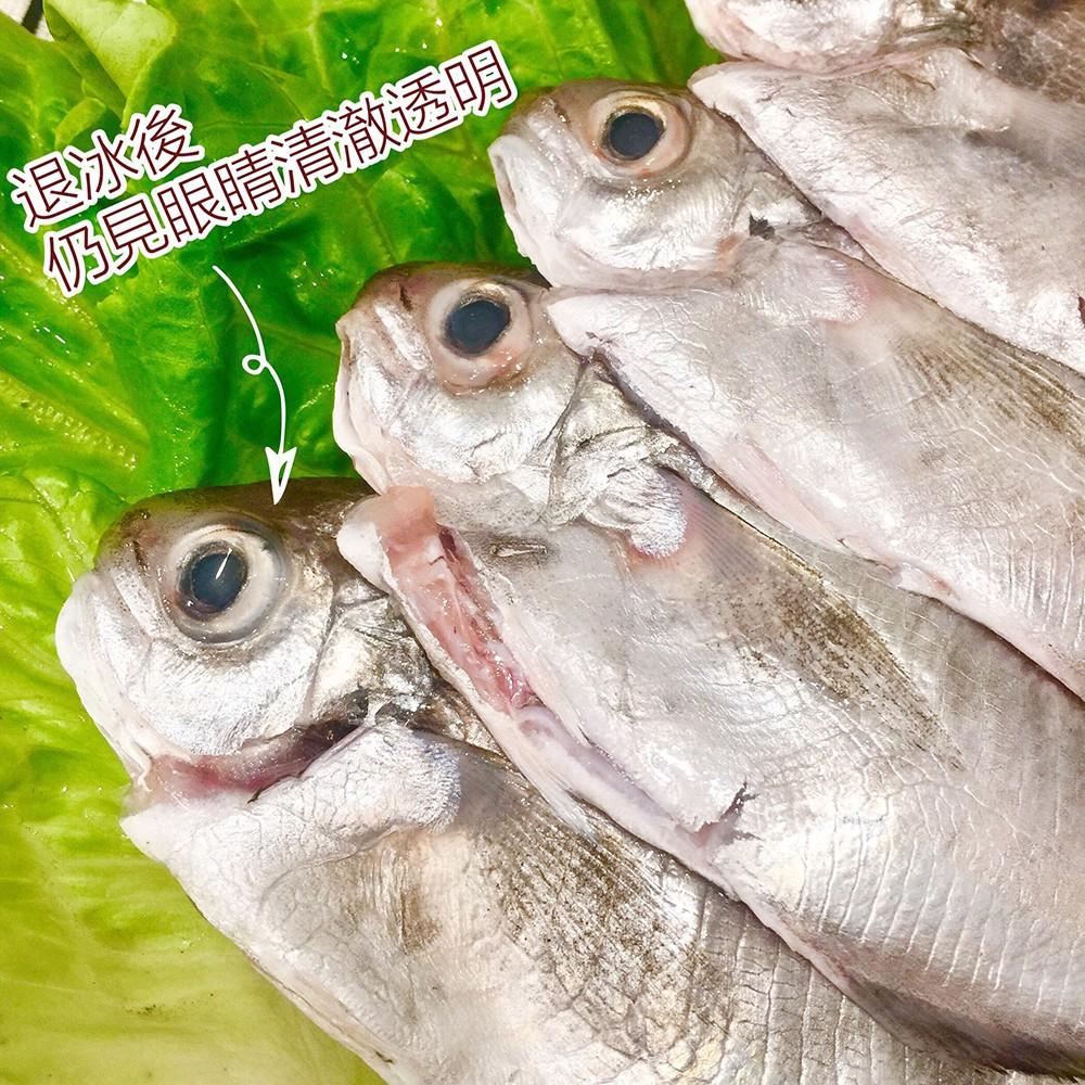 【老張鮮物】澎湖野生肉魚 (250g±10%/包)
