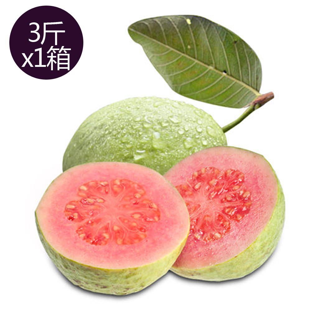 【果之家】燕巢紅心芭樂3台斤(1箱/約3-5顆)