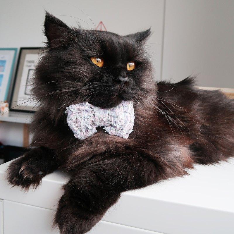 日光花呢領結為寵物