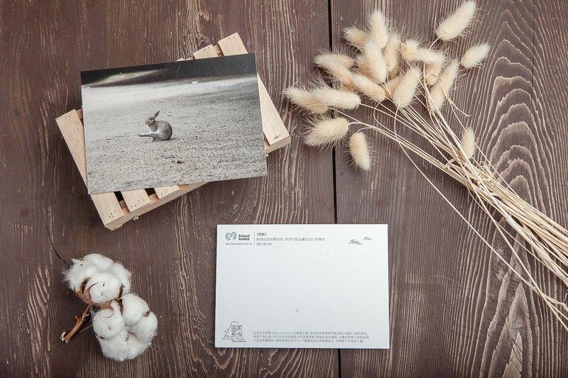 兔子攝影明信片- 獨舞
