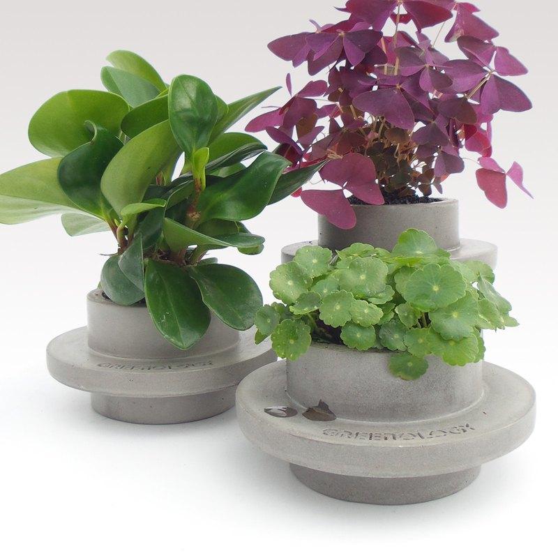 GREENOLOGY 水泥圓形凸腰帶式花盆(小)