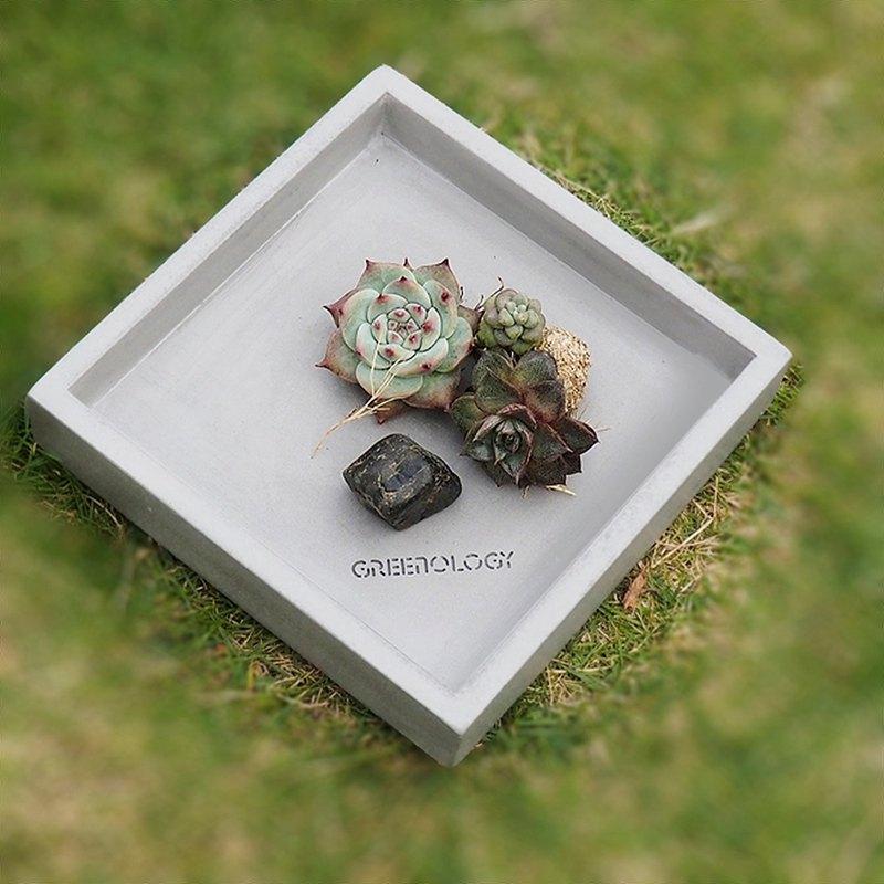 Greenology 方形水泥碟