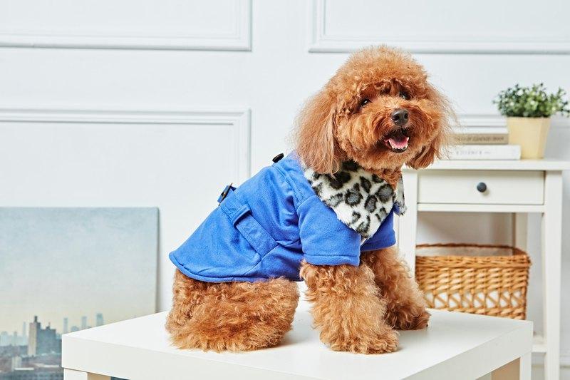 【毛公爵】寵物衣 豹紋毛領大衣 藍