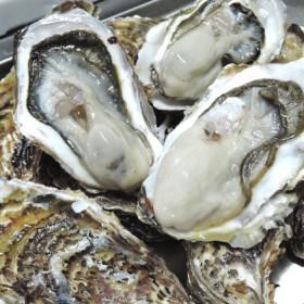 オホーツクサロマ湖産 殻付き牡蠣貝2年物 3kg(20個前後)