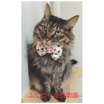 トランプ柄のモコモコ蝶ネクタイ猫ちゃんの首輪