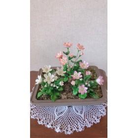 雪割草の花【一点物 ︎珍しいお花】