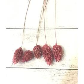 大地農園ポアプランツクラッシックピンク小分けハーバリウム花材プリザーブドフラワー