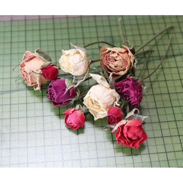 スプレーバラの Dry Flower(5cm長:10輪set)