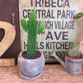 現品 【可愛いサボテン】陶器鉢 受け皿つき!育てやすい多肉植物 大人気!