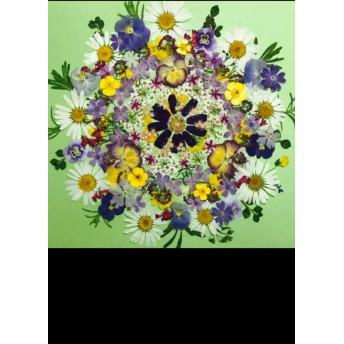 押し花☆マーガレット、クリサンセマム、ライラック、コデマリ他小花たくさん 花材