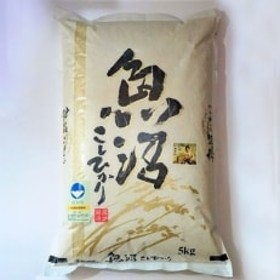 【令和元年産】農家直送 魚沼産特別栽培コシヒカリ 5kg