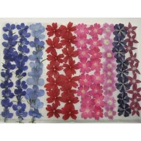 押し花素材 ロベリア バーベナ ペンタス ️