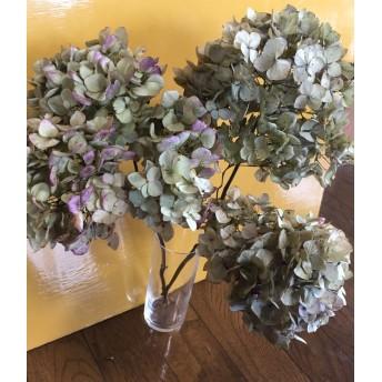 お花屋さんが作った秋色紫陽花 Bランク品の3本セット 4