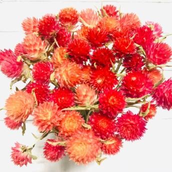 千日紅 ドライフラワー 茎付き 花材 スワッグ リース ハーバリウム クリスマスカラー