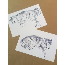 柴犬ポストカード2枚セット