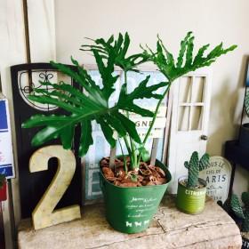現品 【セローム】大きめ葉っぱ ピックつき♪オシャレグリーン 緑ブリキ鉢!