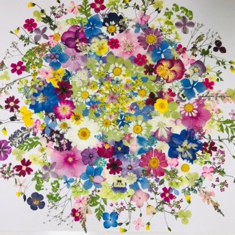 押し花素材 花材☆ニチニチソ草、アナベル、アジサイ、ビオラ他 小花MIXたくさん