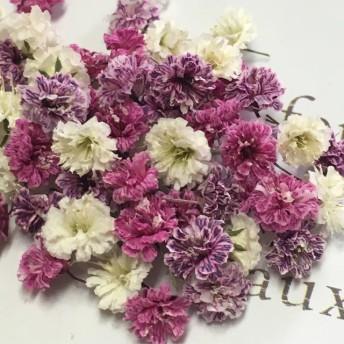 小粒 かすみ草 ドライフラワー purple elegance mix