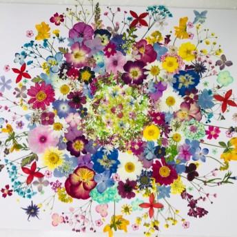 押し花 花材 素材☆かすみ草、ミニバラ、ニチニチソウ、アリッサム他小花MIX