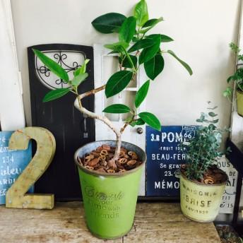 新作 現品【くねっとアルテシーマ】おしゃれグリーン 人気の観葉植物!緑系ブリキ鉢