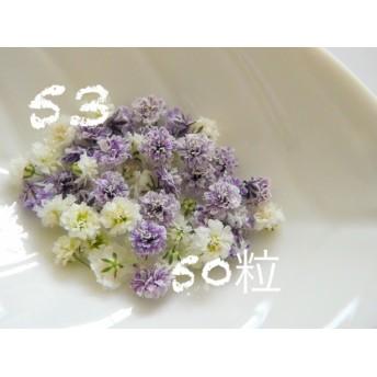 53かすみ草 ドライフラワー