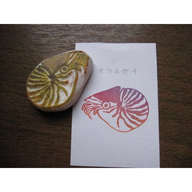 消しゴムはんこ オウムガイA 生きている化石