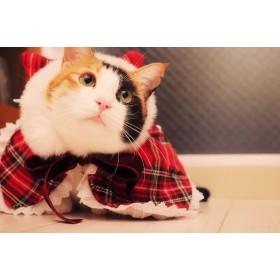 愛犬、愛猫のお洋服「猫耳ポンチョ」