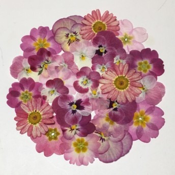 天然押し花素材 123