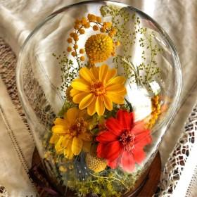 植物ガラスドーム